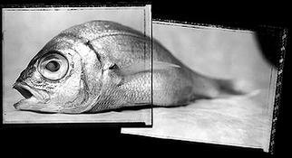 Rafael Roa: 'the fish in two parts', 2003 Silver Gelatin Photograph, Visionary. Two polaroid 55 black & white platesprinting in a silver gelatin with a selenium tone...