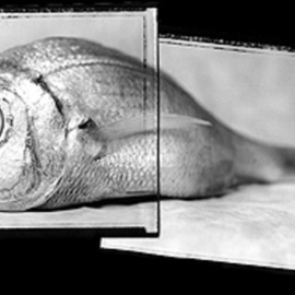 Rafael Roa Artwork the fish in two parts, 2003 Silver Gelatin Photograph, Visionary