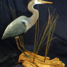 Chris Dixon: 'Miniature Great Blue Heron Sculpture, 29 in', 2013 Mixed Media Sculpture, Birds. Artist Description:  for sale: Miniature Great Blue Heron is 26 inches tall. Sculpture overall dimensions 28 L x 14 W x 29 H inches tall. There are 2 color morphs of the great blue heron, white and blue. Although the great blue heron can be found all over America, the ...