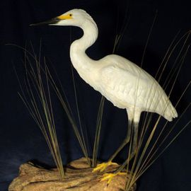 Chris Dixon: 'Snowy Egret Sculpture, 29 inch', 2013 Mixed Media Sculpture, Birds. Artist Description:  Snowy Egret ( Egretta thula) bird is 26 inches tall. Sculpture overall dimensions 28 L x 14 W x 29 H inches tall. Almost hunted to extinction for its plummage the snowy egret has made a comeback. This statue can be painted as any heron, crane, egret specie desired. ...