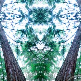 Redwood Mystic
