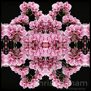 Chris Oldham: 'Zebra Orchid ', 2016 Digital Photograph, Meditation. Artist Description:  Zebra Orchid Composition to produce a DNA style image of beautiful complexity pattern and balance. ...