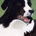 Bandit, Border Collie By Christine Winship
