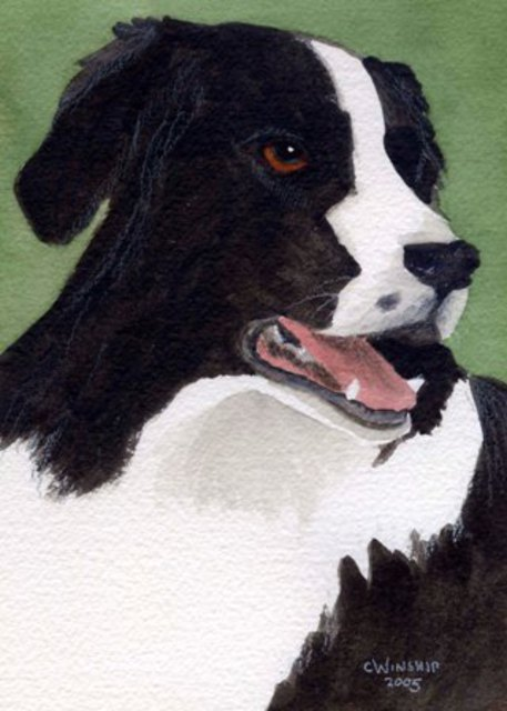 Artist Christine Winship. 'Bandit, Border Collie' Artwork Image, Created in 2005, Original Watercolor. #art #artist