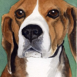 Beagle By Christine Winship