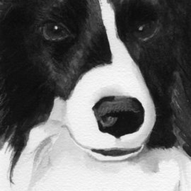 Border Collie By Christine Winship