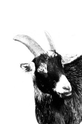 Christy Park: 'Black Goat', 2014 Mixed Media Photography, Animals. Artist Description:             photograph, digital manipulation and print                                                         ...