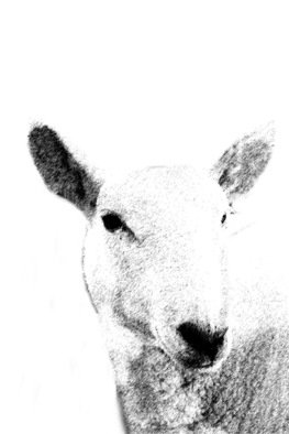 Christy Park: 'White Sheep', 2014 Mixed Media Photography, Animals. Artist Description:              photograph, digital manipulation and print                                                          ...