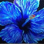 blue hibiscus By Cindy Pinnock