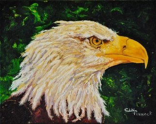 Cindy Pinnock: 'eagle', 2017 Oil Painting, Birds. Artist Description: American Eagle, bald eagle, birds of prey, eagle portrait, wildlife art, spirit animal, eagle artwork, canvas, original oil, American eagle...