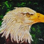 eagle By Cindy Pinnock