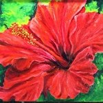 red hibiscus By Cindy Pinnock