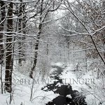 Prospect Park Brook By Martin A Ettlinger