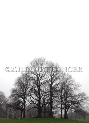 Martin A Ettlinger: 'Prospect Park Knoll', 2011 Color Photograph, Nature. Artist Description:  Prospect Park Knoll is a collection of trees in this most beautiful park. Photo is behind glass in a white wood frame. ...