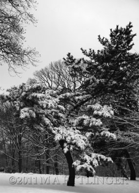 Martin A Ettlinger Artwork Prospect Park Single Pine, 2011 Color Photograph, Nature