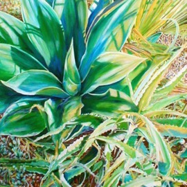 The Succulent Aloe By Caren Keyser