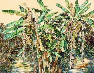 Caren Keyser: 'banana trees', 2001 Acrylic Painting, Nature. Banana Trees often include dead or dying fronds of dry curling old leaves.  This group is no exception.  There are also clusters of green bananas and the broad swaying green branching leaves that the plants are so distinctive.  ...