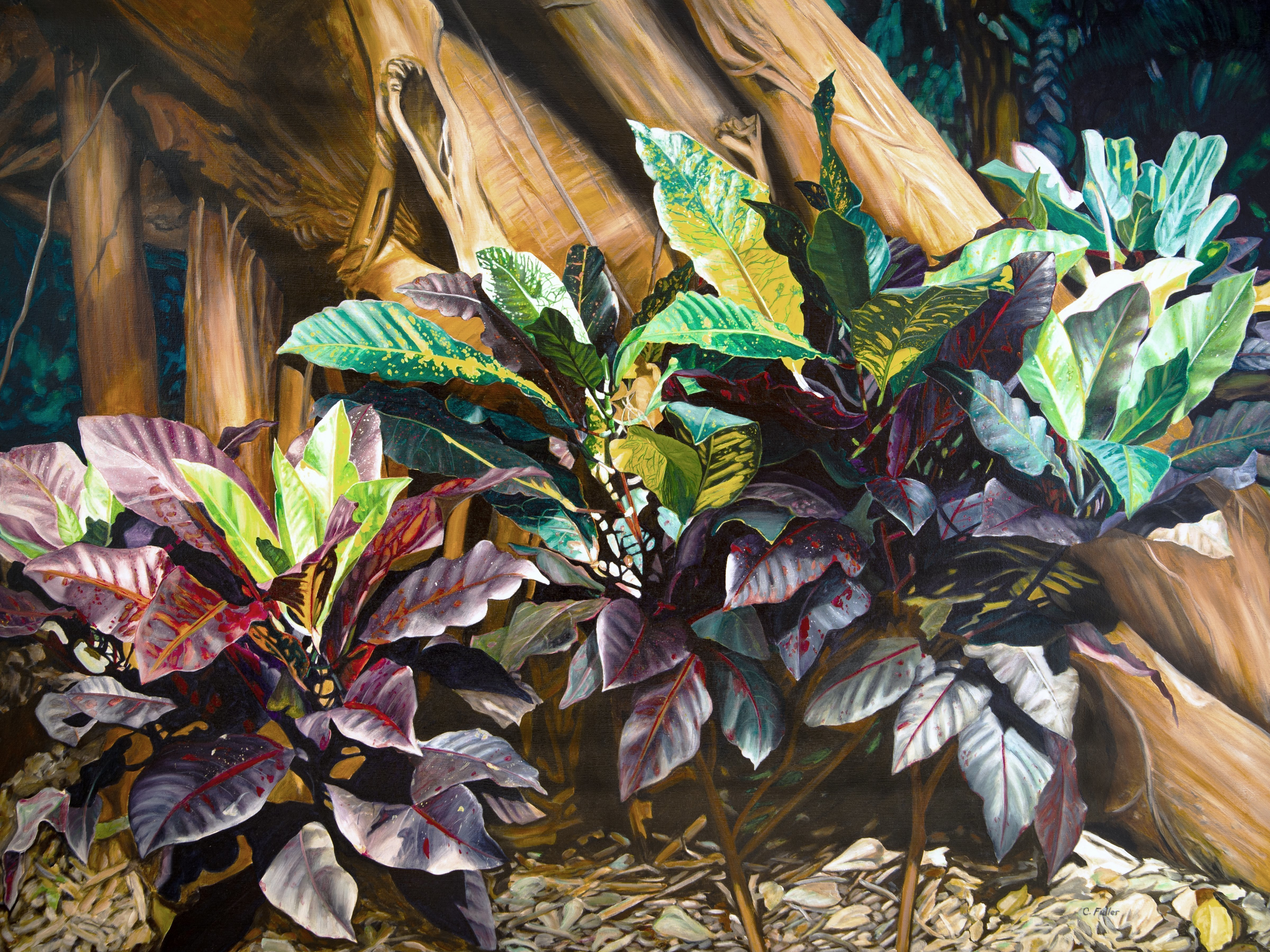 Caren Keyser: 'croton and the strangler fig', 1980 Acrylic Painting, Nature. Created in 1980 this modern realistic acrylic painting was from a photo of young croton plants at the base of a tree being taken over by a strangler fig tree.  The vibrant colors and strong contrast bring the piece to life.  It has been newly photographed for large prints.  ...
