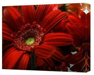 Clayton Bruster: 'Red Floral', 2009 Color Photograph, Floral. Artist Description:  Beautiful red floral printed on stretched canvas. ...
