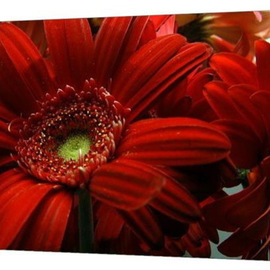 Clayton Bruster Artwork Red Floral, 2009 Color Photograph, Floral