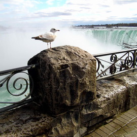 A Great White Birds View Of The Mighty Niagara, Clinton Lown