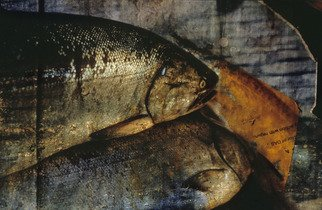 Color Photograph by Claudia Nierman titled: Fishi news paper, created in 2003