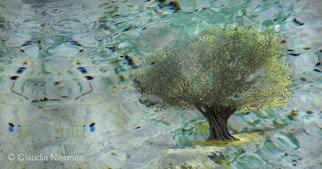 Claudia Nierman: 'Olive Tree', 2012 Other Photography, Magical. Artist Description:   Printed on cotton archival photography paper or metallic photographic paper.mages can be framed or mounted on sintra with or with out acrylic. I am happy to custom made for each person's need.  ...