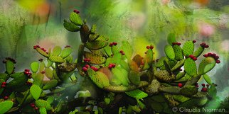 Claudia Nierman: 'The Singing Cactus', 2012 Other Photography, Magical. Artist Description:   Printed on cotton archival photography paper or metallic photographic paper.mages can be framed or mounted on sintra with or with out acrylic. I am happy to custom made for each person's need. ...