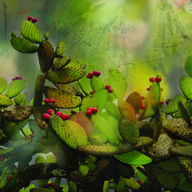 Claudia Nierman Artwork The Singing Cactus, 2012 Other Photography, Magical