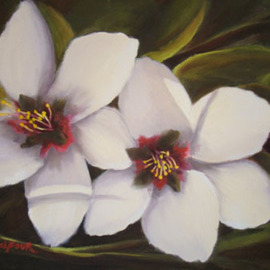 Colleen Balfour Artwork Almond White, 2009 Oil Painting, Floral