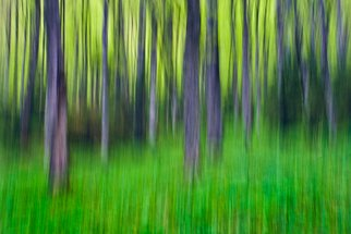 Cristina Ion Artwork The spring in the forest , 2011 Color Photograph, Abstract Landscape