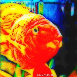 Katie Pfeiffer Artwork Love Fish, 2014 Color Photograph, Fish