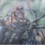 squirrel By Marina Stewart