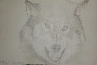 Matthew Lannholm: 'i dare not', 2016 Pencil Drawing, Wildlife. Artist Description: Grey wolf freehand pencil...