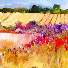 Lavender in Sonoma