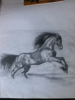 Daniela Vasileva: 'Black horse ', 2016 Graphite Drawing, Horses.  Horse Stallion wind freedom ...