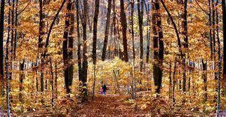 Dave Martsolf: 'Golden Gate', 2009 Giclee, Trees.  A collection of several photographs stitched together and played with a bit, taken on a sparkling late autumn day in the New Hampshire ( USA) woods. ...