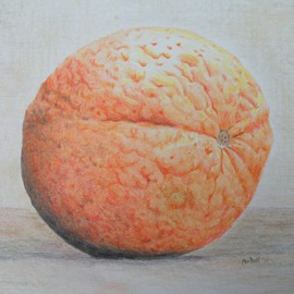 Dave Martsolf Artwork Orange, 2011 Pencil Drawing, Still Life