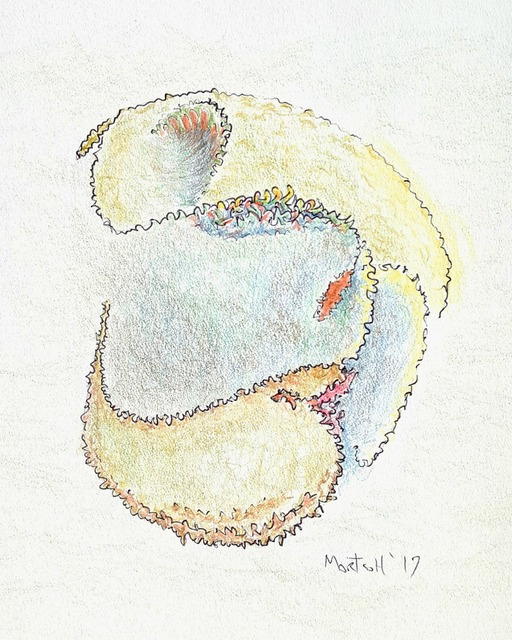 Dave Martsolf  'Turtle Helmet', created in 2017, Original Drawing Pastel.