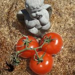 Angel in Bird Bath with Tomatoes By Debra Cortese