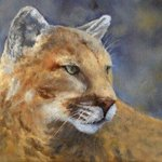 Cougar By Debra Mickelson