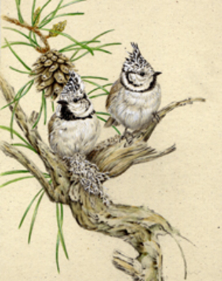 Artist: Dennis Mccallum - Title: Crested Tits - Medium: Watercolor - Year: 2008