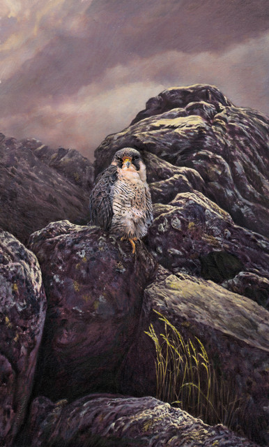 Artist Dennis Mccallum. 'Peregrine Falcon' Artwork Image, Created in 2015, Original Painting Other. #art #artist