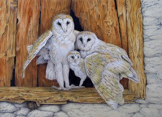 Dennis Mccallum: 'barn owl family and a mouse', 2015 Watercolor, Birds. Artist Description: A very quiet little mouse shares a home with the owls. ...