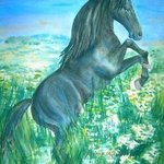 Black Stallion By Deborah Paige Jackson