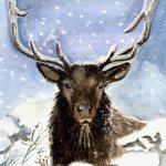 winter deer By Deborah Paige Jackson
