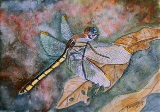 Derek Mccrea: 'Dragonfly', 2013 Giclee, Animals.  Dragonfly insect animal wildlife watercolor painting giclee art print   ...
