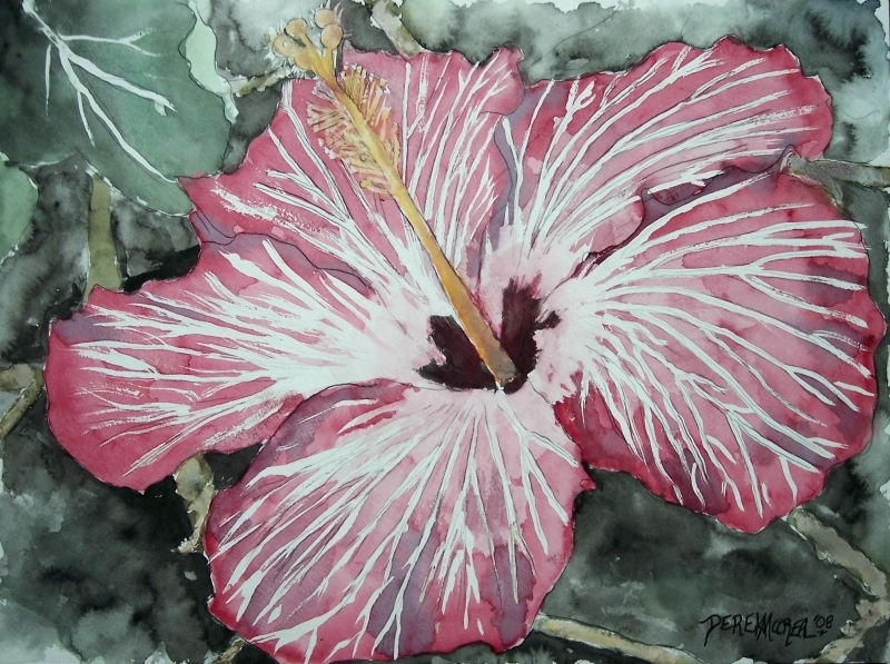 derek mccrea artwork hibiscus flower watercolor poster print