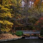 Atlanta Fall By Dion Mcinnis