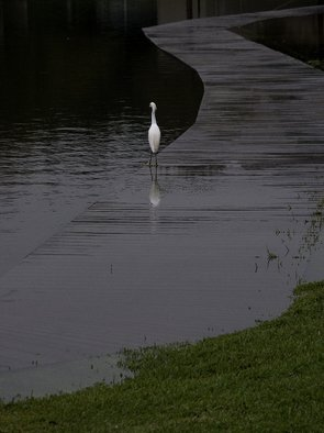Artist: Dion Mcinnis - Title: Egret on walk - Medium: Color Photograph - Year: 2004